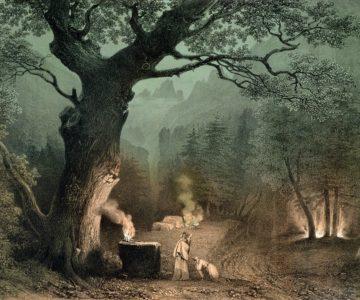 Paměť stromů (citát)
