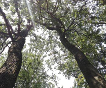 Rozhovor s lesníkem