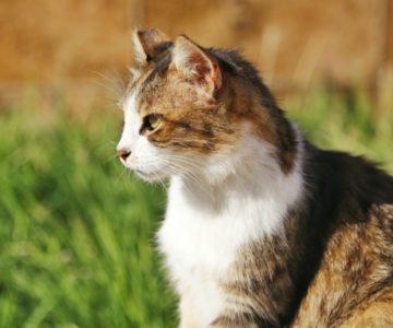 Kočičí sněm